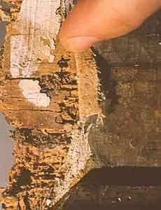 Fori e gallerie di tarlo in superficie - I falsi nel'arte