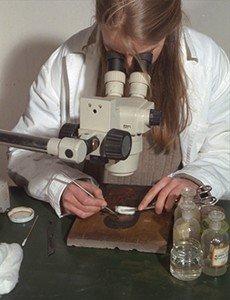 Pulitura di un dipinto al microscopio