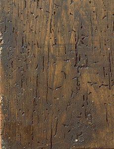 Gallerie provocate da insetti xilofagi